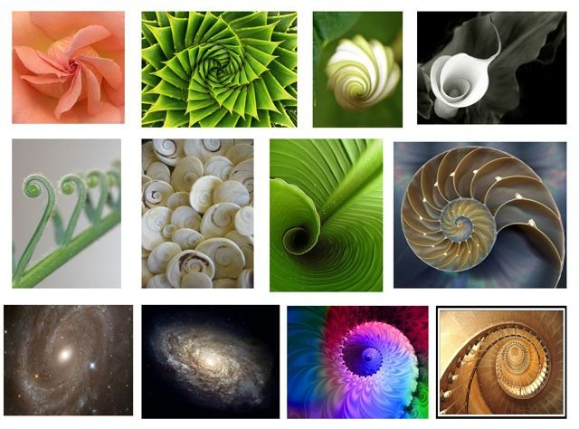 ejemplos proporción aúrea en la naturaleza